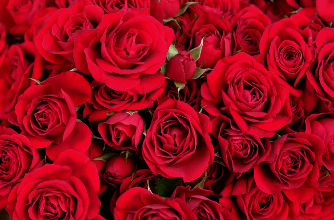 , Kako da ruže traju duže?